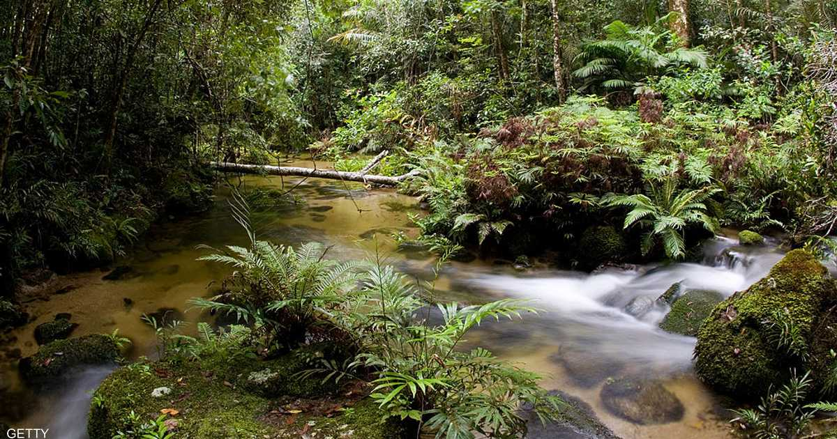 أسترالي ينجو بأعجوبة من الهلاك بعد حادث في الغابة