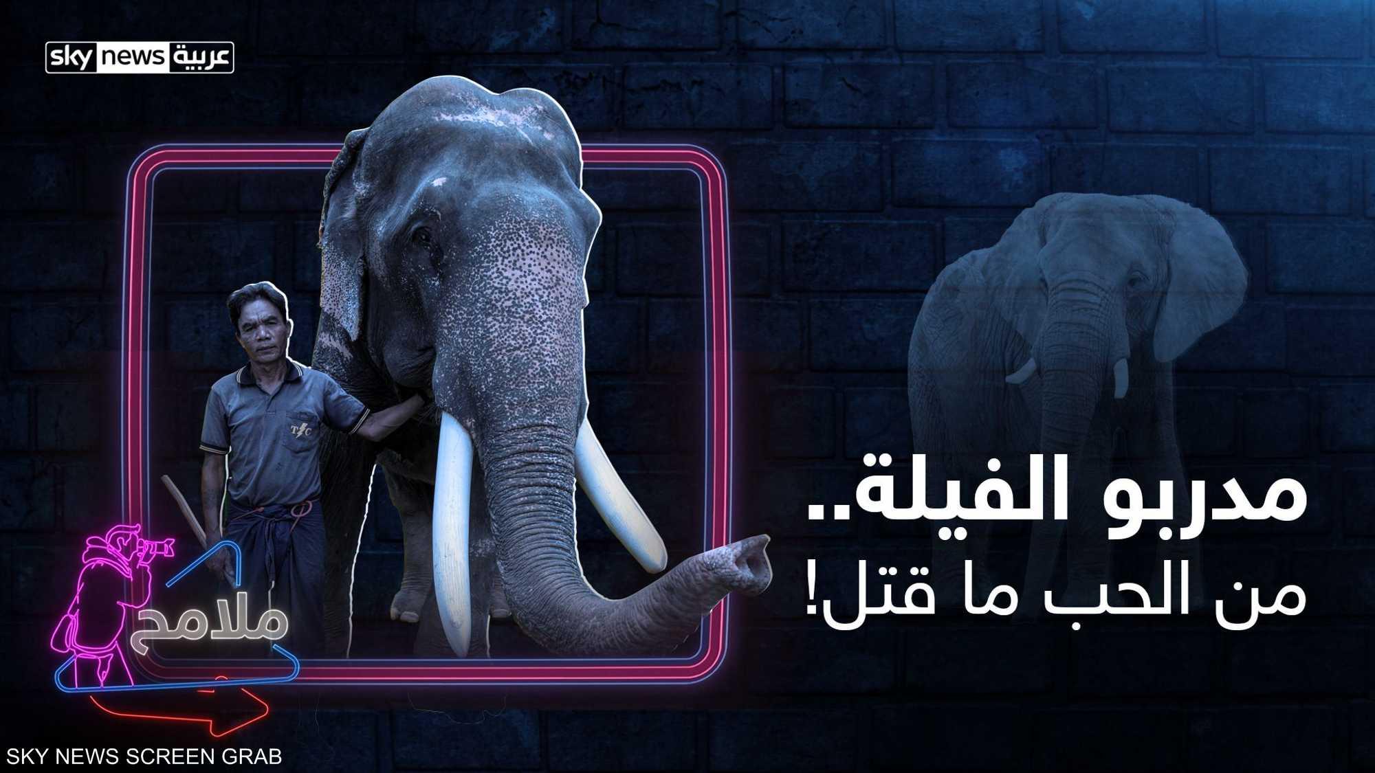 """أسرار """"ترويض"""" الفيلة"""
