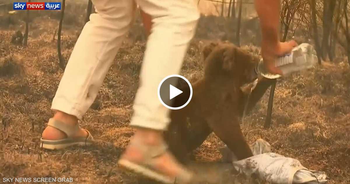 """أستراليا.. إنقاذ """"كوالا"""" من حريق مستعر"""