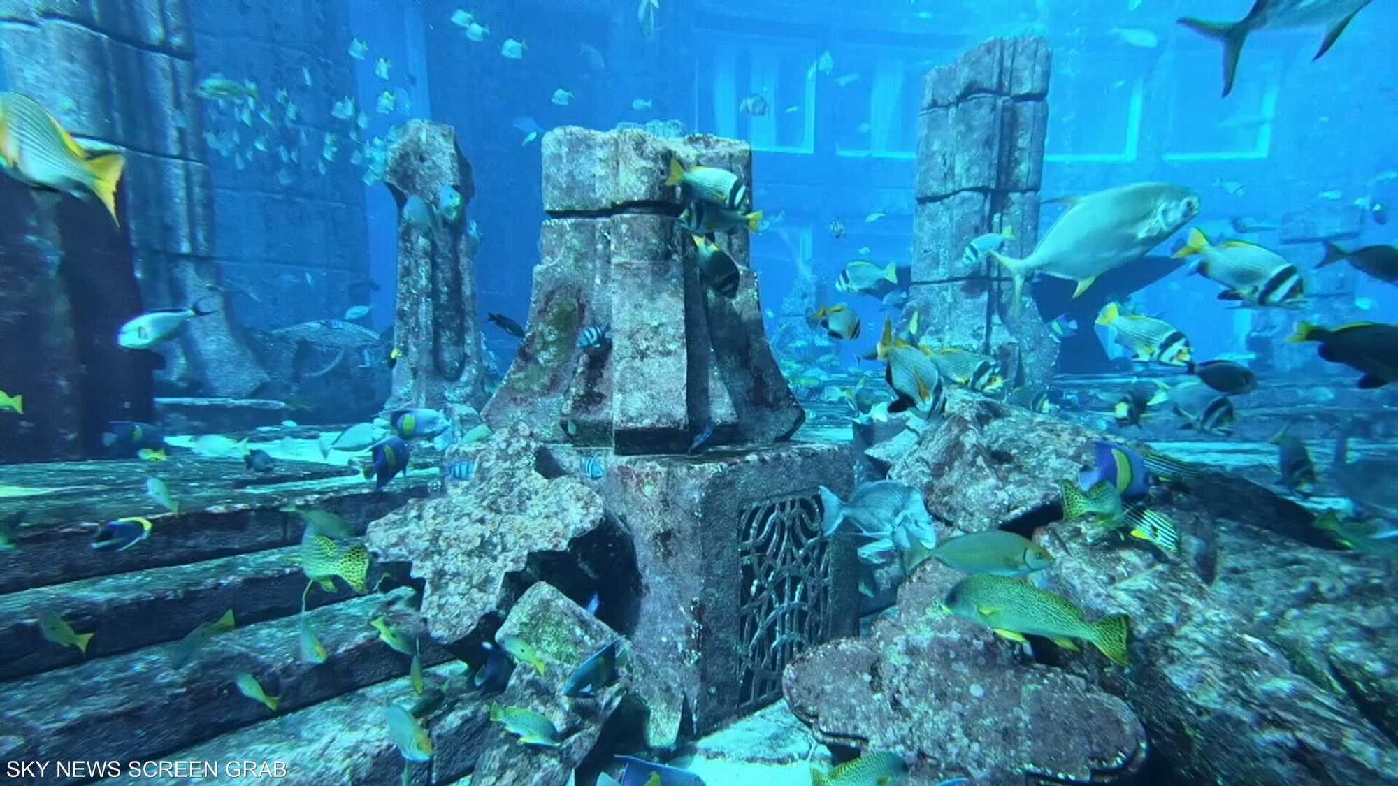 رحلة مثيرة ومشوقة في الحوض الأعمق في العالم بدبي