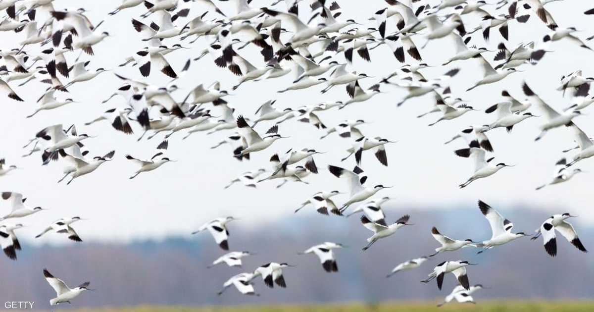 التغير المناخي والطيور.. دراسة تكشف