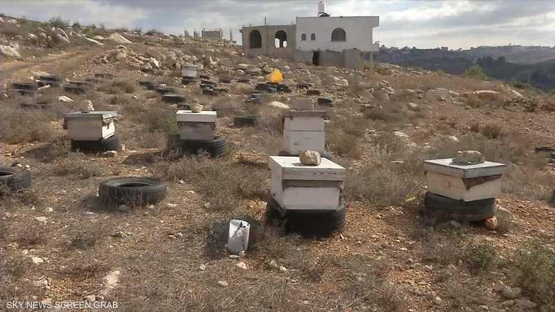 قطاع تربية النحل يواجه صعوبات بسبب الاستيطان