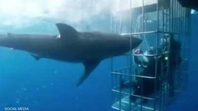 فيديو مرعب.. القرش اقتحم القفص والغواصون نجوا بآخر لحظة