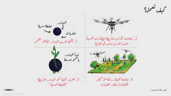 كيفية عمل البذور وزراعة الأشجار وفقا لفلاش فوريست