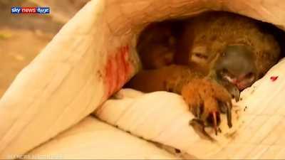 حرائق أستراليا تقتل نحو نصف مليار حيوان