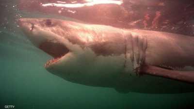 """معاناة القرش.. لماذا تتألم الملايين من """"وحوش البحر""""؟"""