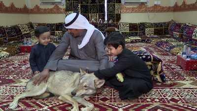 فيديو.. أسرة سعودية تعيش مع الذئاب منذ 11 عاما