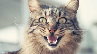 """""""قطة شريرة"""" تحبس امرأة يومين.. وفرق الإنقاذ تتدخل"""
