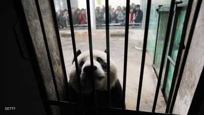 """""""مهمة خاصة"""" للشرطة الصينية مع الحيوانات ضد وباء """"كورونا"""""""