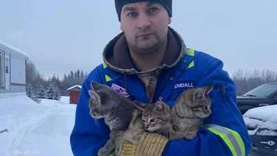 فيديو.. شاب ينقذ قططا من الموت بكوب قهوة