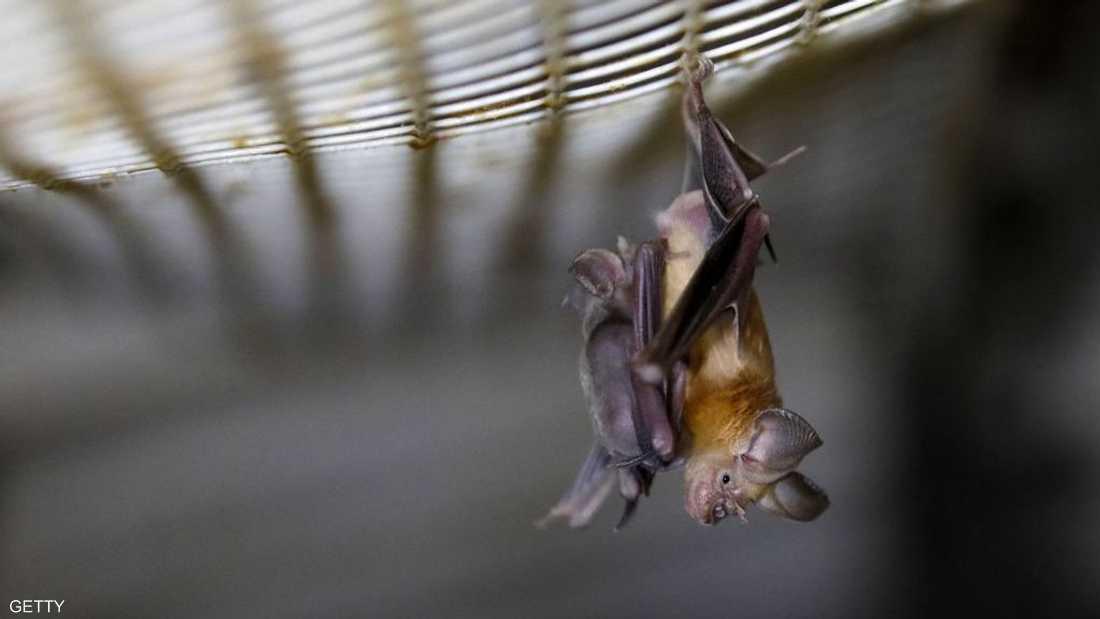 مصدر المرض لم يتأكد لكن علماء يعتبرون الخفاش المسؤول عنه