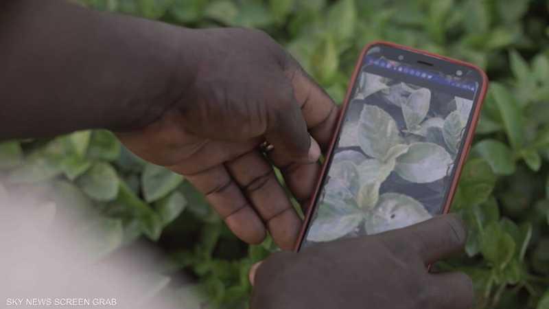 أكوافو.. تطبيق لمكافحة الآفات الزراعية