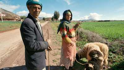 المغرب.. خطط ضخمة لتطوير القطاع الزراعي