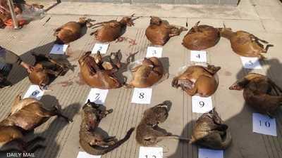 """رغم الحظر والتجريم.. تهريب """"حيوانات كورونا"""" مستمر في الصين"""