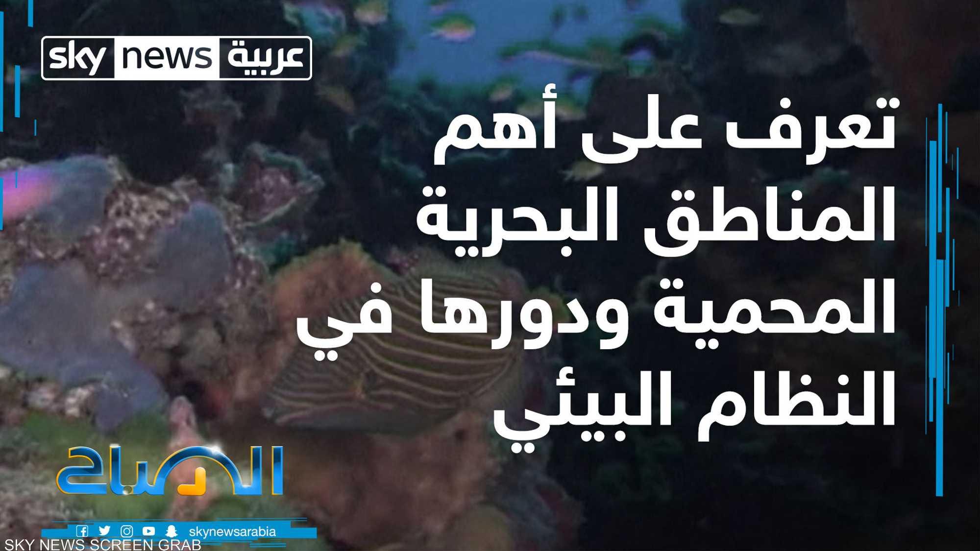 المناطق البحرية المحمية.. ودورها في النظام البيئي