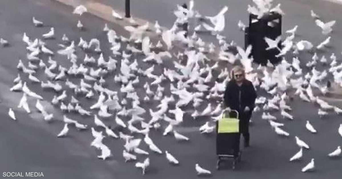 الحمام والسيدة المسنة.. لماذا أصاب كورونا الطيور بالجوع؟