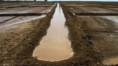 السودان.. صندوق استثماري لدعم الزراعة
