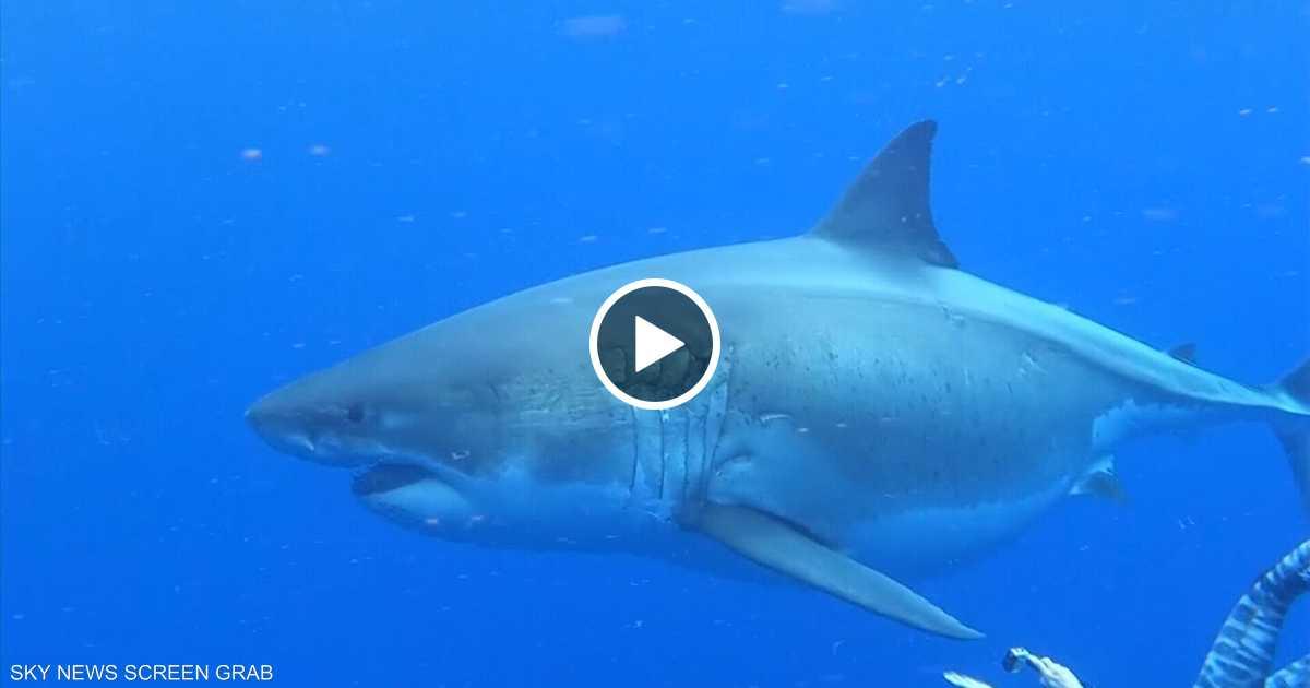 السباحة مع القرش مغامرة مليئة بالإثارة