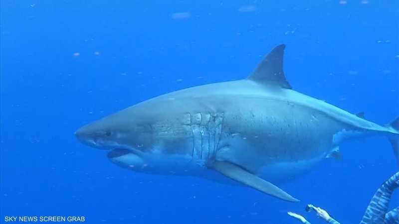 مغامرة السباحة مع أسماك القرش مليئة بالإثارة