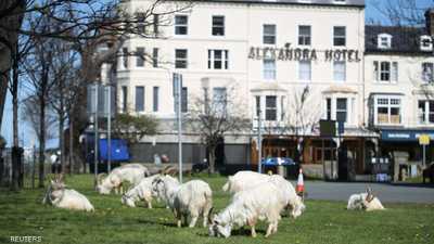 التزم السكان منازلهم بسبب كورونا.. فاحتل الماعز البلدة