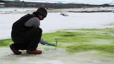 """أنتاركتيكا تكتسي بـ""""الأخضر"""".. دراسة تكشف كل شيء"""