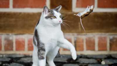 القطط والفئران.. دراسة تكشف تاريخ العلاقة المتوترة