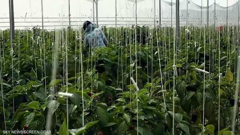 وزارة الزراعة: صادراتنا لم تتأثر بأزمة كورونا