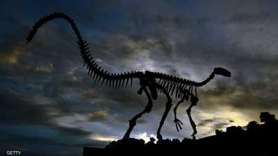 أرشيفية لهيكل عظمي خاص بديناصور