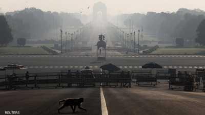 الهند.. مخاوف من تفشي كورونا بولاية بعد سرقة قرود عينات دم