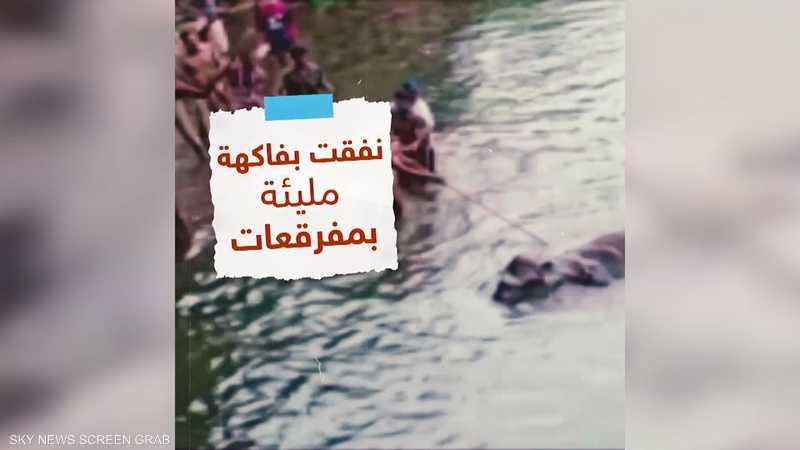 نفوق فيلة بسبب أكلها ثمرة أناناس تحتوي متفجرات