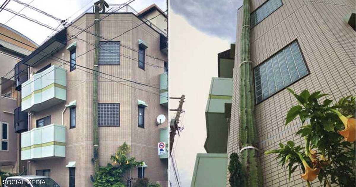 بالصور.. شجرة ضخمة تثير دهشة سكان مدينة يابانية
