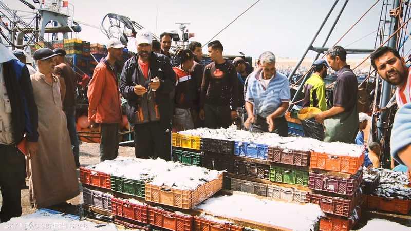تراجع نشاط الصيد العالمي للأسماك 6.5% بسبب كورونا