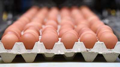 منتجو البيض في المغرب يخسرون 36 مليون دولار بسبب كورونا