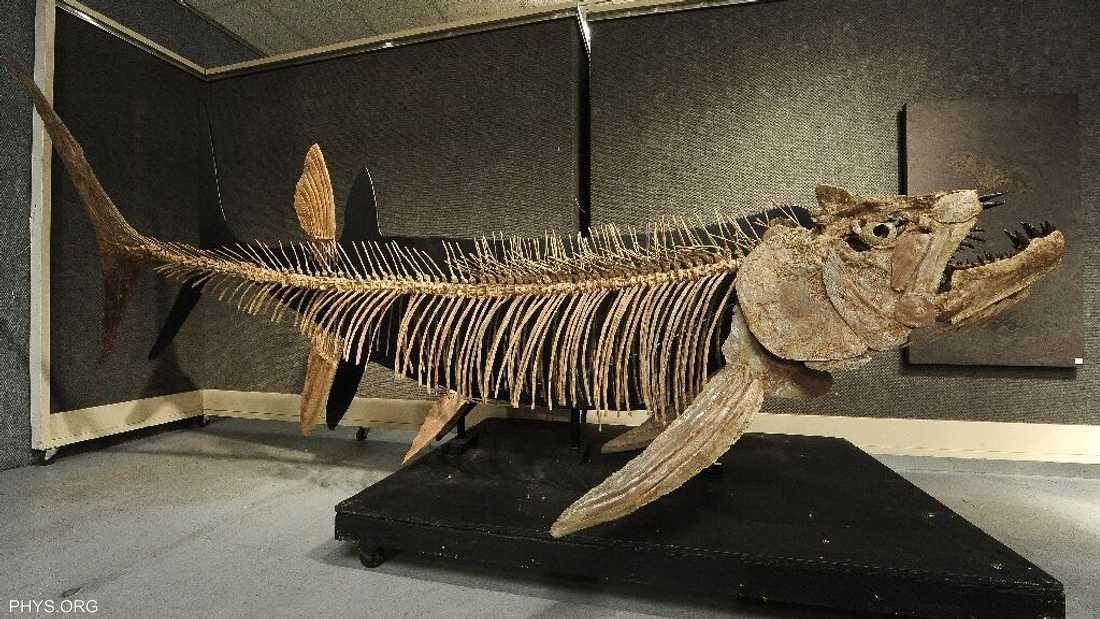"""سمكة """"تناطح"""" الديناصورات.. اكتشاف عمره 70 مليون سنة"""