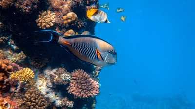 دراسة تكشف أثر الضوضاء على الأسماك