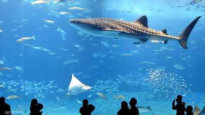 بحث جديد: أضخم أسماك الأرض.. أنثى