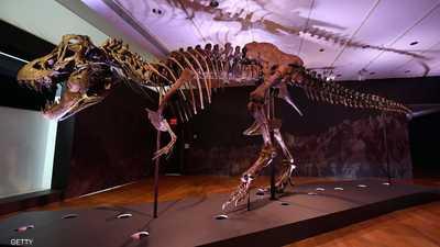 """""""ديناصور للبيع"""".. وتوقعات بسعر """"خيالي"""""""
