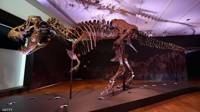 إحدى الهياكل العظمية للتيرانوصور