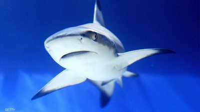 """لقاح كورونا"" يضع نصف مليون سمكة قرش في خطر"