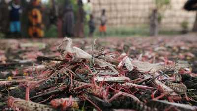 أسراب الجراد في إحدى المناطق في إقليم أمهرة