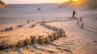 عمرها 37 مليون سنة.. مصر تكتشف عظام أقدم بجعة بالتاريخ