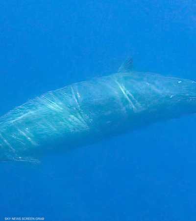 علماء يكتشفون نوعا جديدا من الحيتان في المكسيك