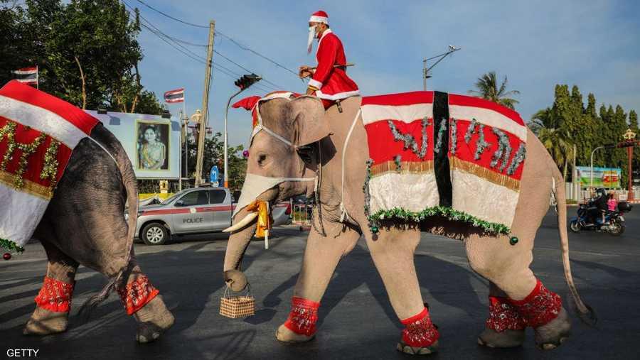 على الفيل في تايلاند