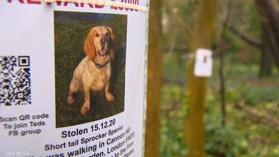 لندن في الإغلاق.. مجرمون يسعون وراء الكلاب