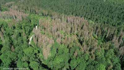 تدمير 43 مليون هكتار من الغابات خلال 13 عاما