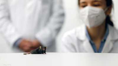 """تجربة """"الفأر المشلول"""" تحمل الأمل لملايين البشر"""