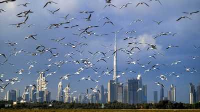 تقرير: الإمارات تضيف 50 ألف مليونير جديد حتى عام 2025
