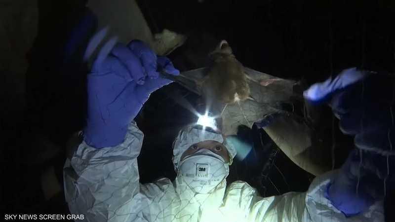 منظمة الصحة: نرجح أن الفيروس انتقل عبر الخفافيش