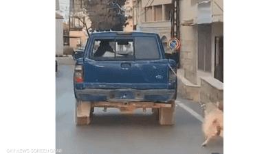 فيديو تعذيب كلب يثير الجدل في لبنان.. ما الحقيقة وراء القصة؟