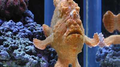 """فيديو يوثق أسماكا """"بشعر وأرجل"""".. والخبراء يفسرون"""